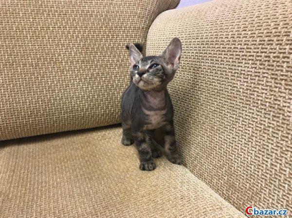 kočička obrázky detailníamatérská chlupatá kočička trubice